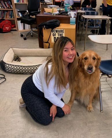The Benefits of Dogs in High School Classrooms